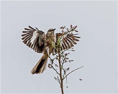 To kill a mockingbird summary essay
